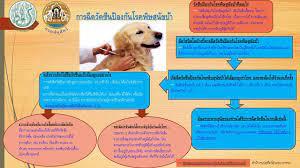 การฉีดวัคซีนป้องกันโรคพิษสุนัขบ้า (ปศอ.บางกรวย)