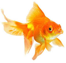 pic of fish. Modren Pic Types Of Fishes 3 Intended Pic Of Fish