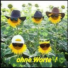 Sommer Hitze Lustig Witzig Sprüche Bild Bilder Sonnenblumen Wetter