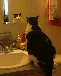 cat looking in bathroom mirror. cat looking in the bathroom mirror pinterest