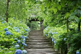 「鎌倉 紫陽花」の画像検索結果