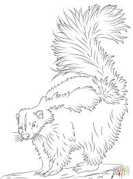 Small Picture Cute Skunk coloring page Free Printable Coloring Pages
