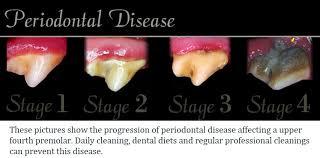 Risultati immagini per dog heart and dental disease