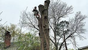 Joseph Cox Earns Isa Tree Risk Assessment Qualification