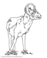 Small Picture Wild Animal Coloring Pages Goat Ram Coloring Page and Kids