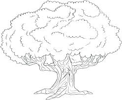 Cool Coloring Pages For Kids Palm Tree Coloring Pages Maple Tree