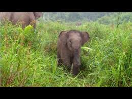 Betino the <b>Flying Elephant</b> Squad Calf Turns One - YouTube