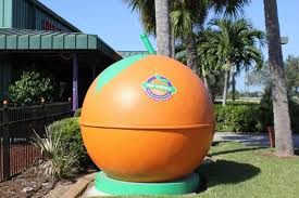 add a little sunshine to your day by touring sun harvest citrus in fort myers must do visitor guides