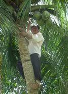 coconut tree essays  coconut tree essays coconut tree essays