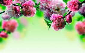desktop wallpaper flowers high resolution. Brilliant High Throughout Desktop Wallpaper Flowers High Resolution I