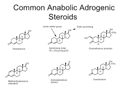 anabolic steroids  11 common anabolic adrogenic steroids