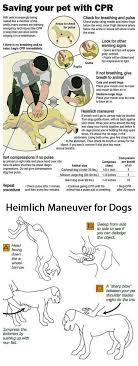 Tips Hacks For Your Dog
