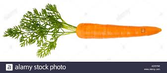 single carrot. Exellent Single SINGLE CARROT CUT OUT  Stock Image In Single Carrot