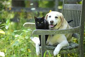 27 Cute Pictures of Cats and Dogs Living Together in Perfect Harmony
