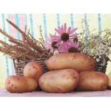 Бинарная посадка картофеля