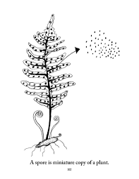 Biology Coloring Pages Elementalsciencecom