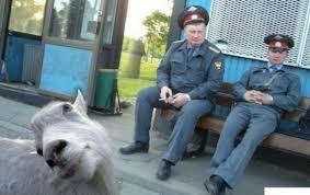"""""""Строители здесь живут. Строят дачу Путину"""", - детский лагерь """"Смена"""" возле Ялты оккупанты заселили рабочими и открыли на территории магазин с алкоголем - Цензор.НЕТ 5702"""