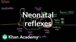 Neonatal Reflexes