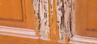 the basics of termite damage repair explained the basics of termite damage repair explained