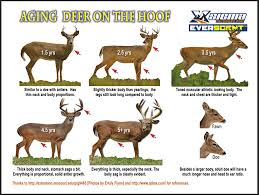 Whitetail Deer Size Chart Updates To Our Almost Famous Aging Deer On The Hoof Poster