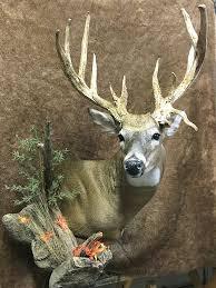 deer whitetail shoulder mounts wall