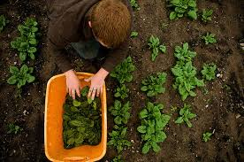 what is organic farming and and benefits of organic food    organic farming at backyard