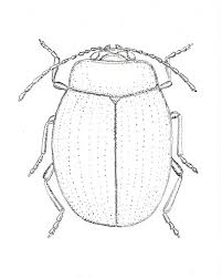 Small Picture 18 best Free Advanced Bug Coloring Pages images on Pinterest
