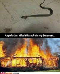 Kill it with fire memes on Pinterest | Spiders, Fire and Funny Spider via Relatably.com