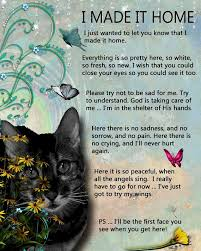 Loss Of A Cat Quotes Awesome Loss Of A Cat Quotes Cat And Dog Lovers