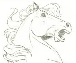 horses drawings in pencil step by step. Fine Drawings Horse Drawings  Easy Horse Head Drawings Pic 16 Horses With In Pencil Step By R