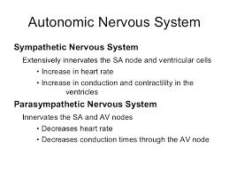 cardiovascular physiology  29