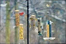 Image result for birds in southern alabama