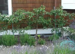 Exterior Gorgeous Home Exterior Design Ideas With Green Grass Good Trees For Backyard