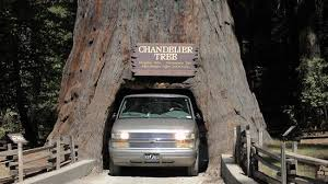 chandelier drive through tree tight squeeze for some