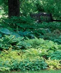 Small Picture Love this Hosta Paradise Trdgrd Garden Pinterest