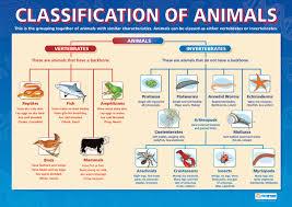Ana S English Classes Science Animals