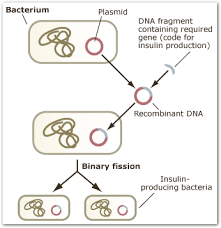 Transgenic plants are used to express proteins, like the cry toxins from b. Transgenic Organisms How Are Transgenic Organisms Created