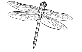 Small Picture FREE Dragonfly Coloring Page 7