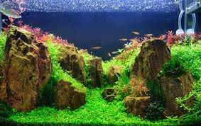 choosing a place for your fish tank