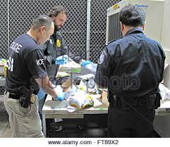 synergy iii a cbp officer hsi agent and dea investigator inspect suspected packages as cbp officer job description
