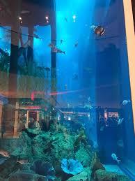 poseidon underwater hotel. Real Underwater Hotel. Per-night-an-bedroom-like-ariel- Poseidon Hotel