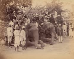 nineteenth century court arts in essay heilbrunn   elephant group