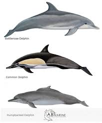 Common Whale And Dolphin Types In Algoa Bay Ab Marine
