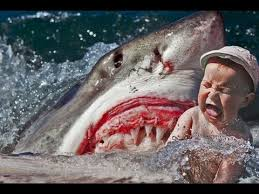 pictures of great white sharks eating people. Modren Pictures DEADLY SHARK ATTACK CAUGHT ON TAPE 18 ONLY  HUMAN EATEN For Pictures Of Great White Sharks Eating People E