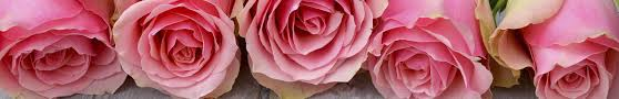 rooside ümberistutamine