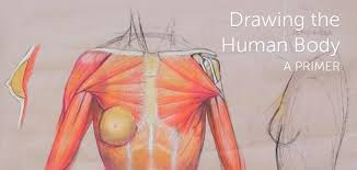 Acland systematically examines all parts of the human form, starting with the bones and finishing with the muscles and superficial skin structures. Drawing The Human Body For Kids