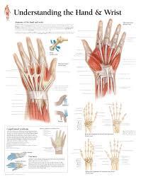 Hand Chart Understanding The Hand Wrist Chart