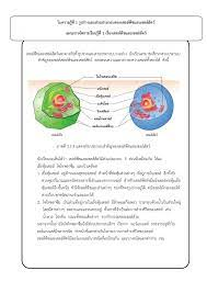 เรื่องเซลล์พืชและเซลล์สัตว์-Flip eBook Pages 1 - 4  AnyFlip