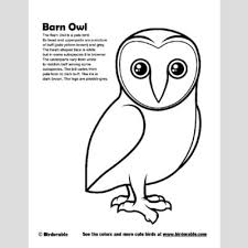 Small Picture Barn Owl Coloring Page Fun Free Downloads Activity Pages