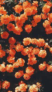 Aesthetic Orange HD Wallpapers ...